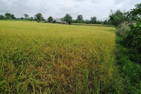 land-for-sale-in-morang